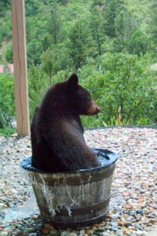 Вода из этой бочки куда-то девается!!! (4 фото)