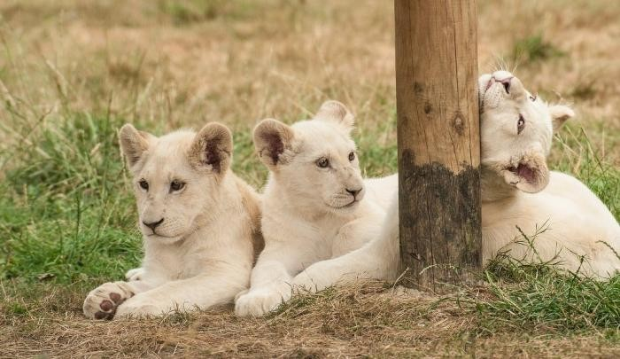 Самые дорогостоящие животные на планете (9 фото)