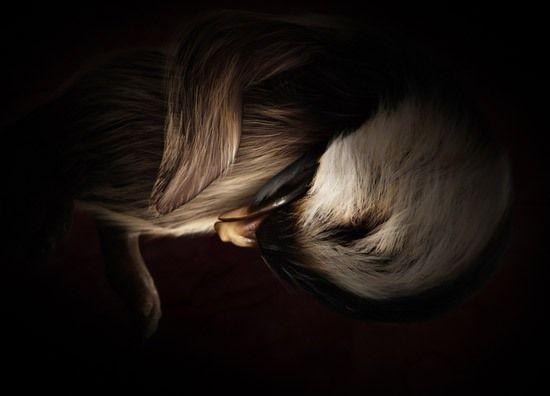 Животные в утробе матери (12 фото)