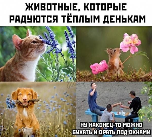 Картинки с надписями (49 фото)