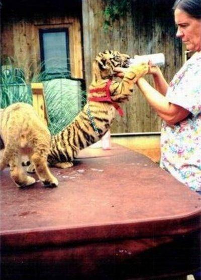 Домашние животные наркобарона (17 фото)