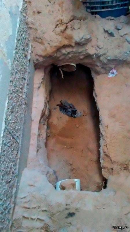 Жительница Мексики услышала странные звуки под своим домом (4 фото)