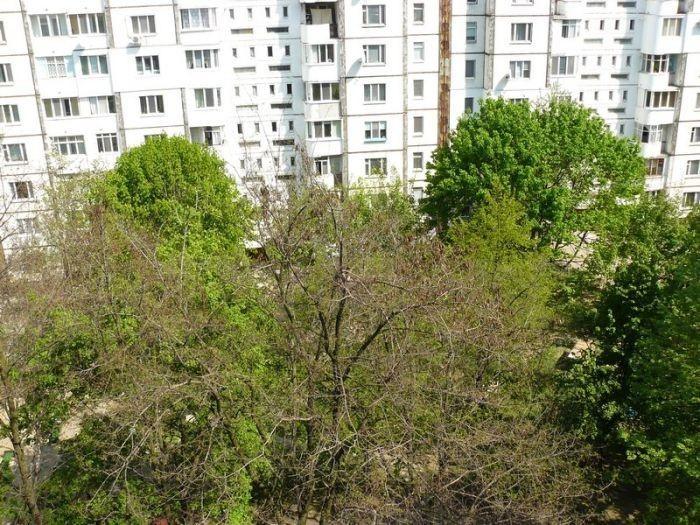 Редкий сосед поселился во дворе (5 фото)