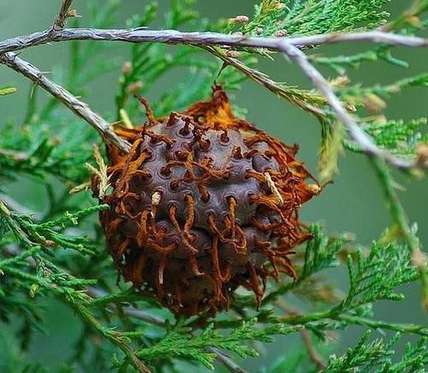 Самые жуткие растения планеты Земля (8 фото)