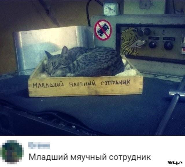 Картинки и шутки из социальных сетей (21 фото)
