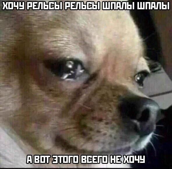 Подборка прикольных фото (48 фото) 16.05.2019