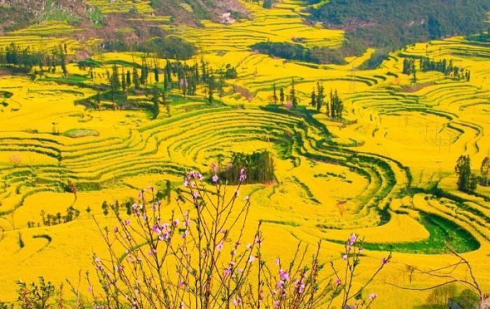 Цветение рапса в Китае (15 фото)