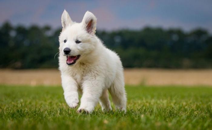 Учёные определили возраст максимальной миловидности щенков (4 фото)