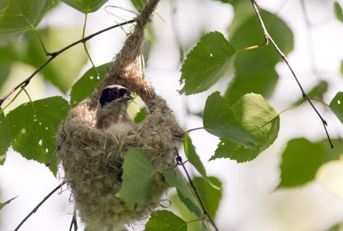 Жизнь птиц вокруг нас (23 фото)