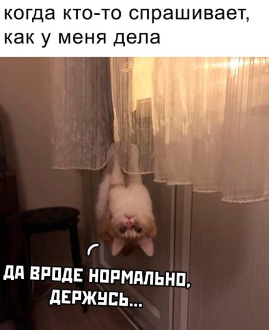 Подборка прикольных фото (43 фото) 22.05.2019
