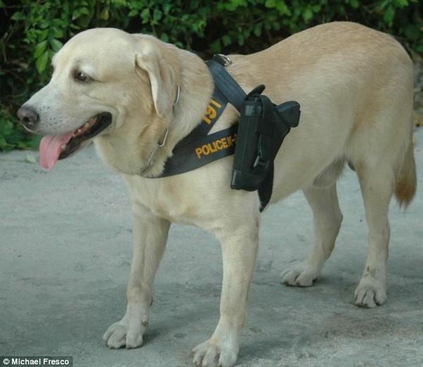 Опасные псы в Таиланде (2 фото)