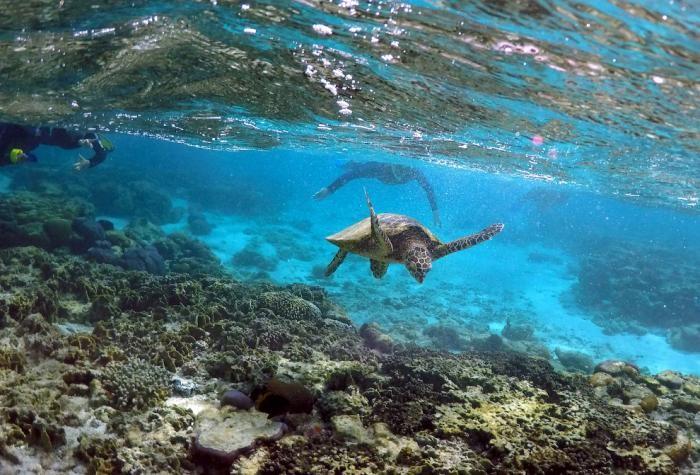 Большой Барьерный риф в фотографиях (16 фото)