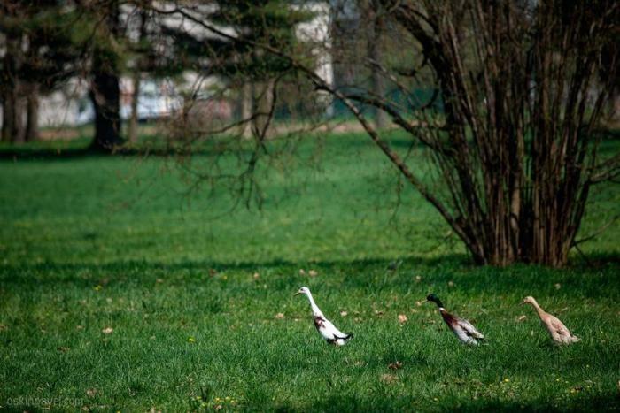 Прогулка по Моравии (15 фото)