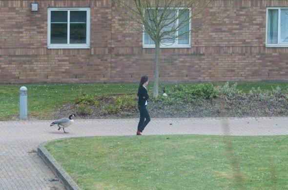 Хищное животное нападает на людей (16 фото)