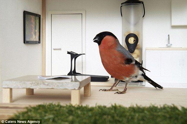 Комфортная кормушка для птичек (6 фото)