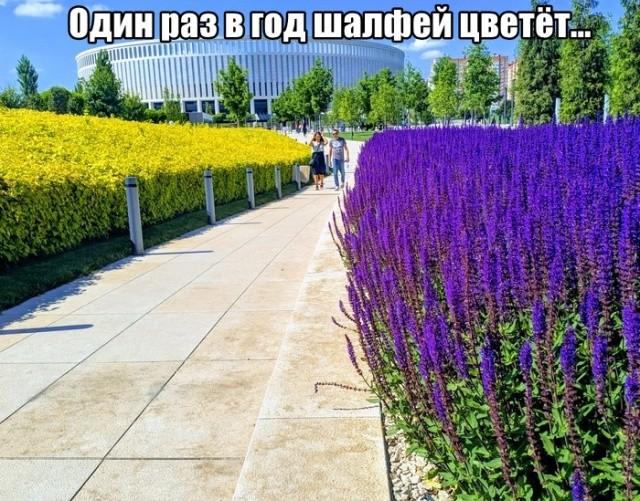 Подборка прикольных фото (52 фото) 30.05.2019