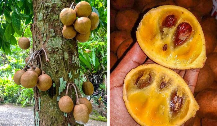 Экзотические фрукты (5 фото)