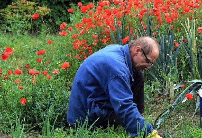 Растения, которые не следует выращивать в саду (2 фото)