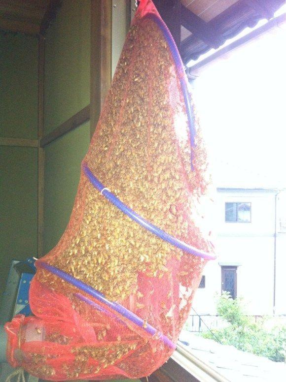 Нехитрый способ избавиться от пчел (12 фото)