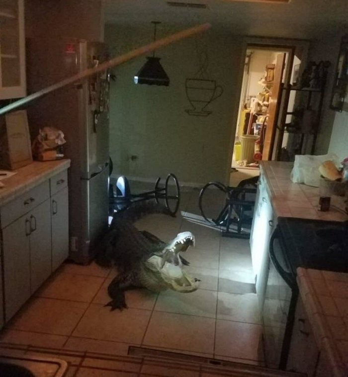 Ночной сюрприз на кухне (4 фото)