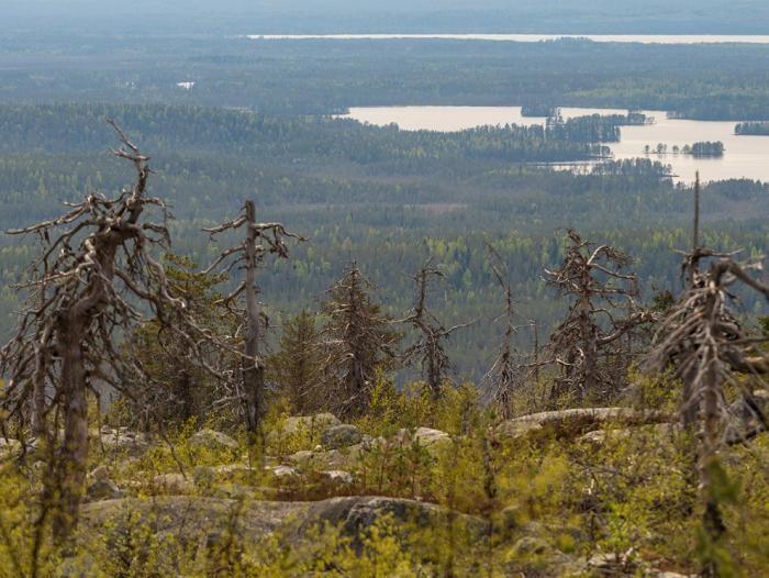 Загадочная гора Воттоваара в Карелии (15 фото)