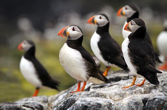 Удивительные тупики: забавные и редкие птицы (3 фото)