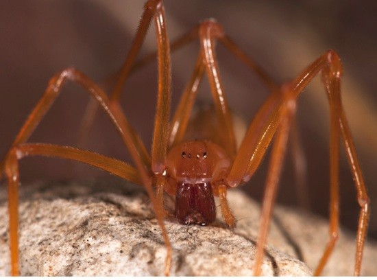 5 недавно открытых довольно жутких существ (5 фото)