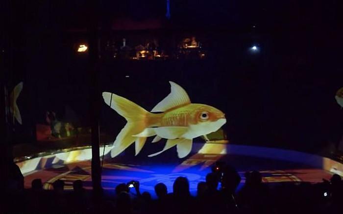 Один из цирков в Германии использует голограммы животных (5 фото)