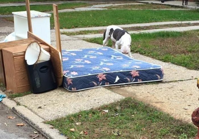 Собака месяц не могла поверить в то,что хозяева бросили (13 фото)