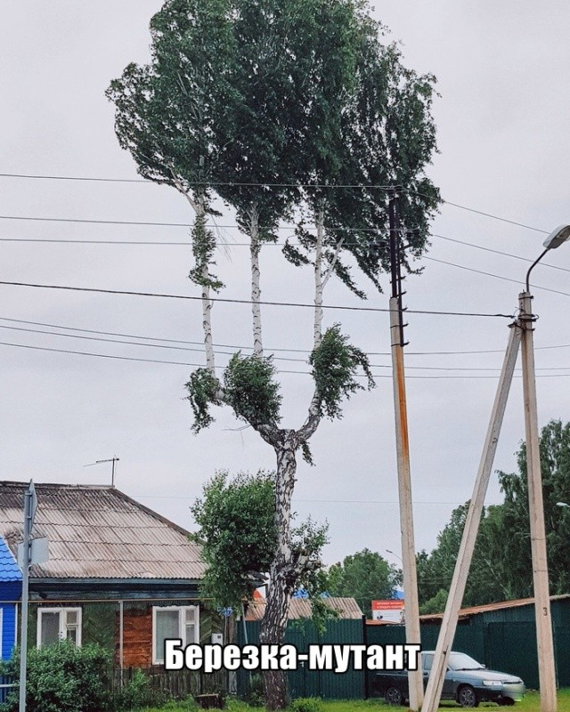 Подборка прикольных фото (61 фото) 11.06.2019