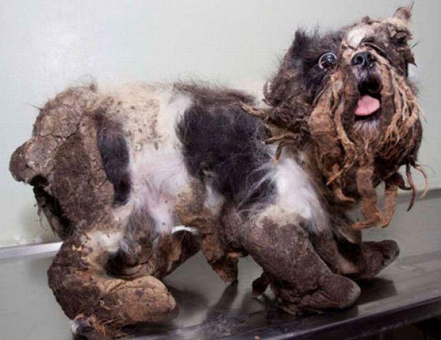 Бездомная собака (10 фото)