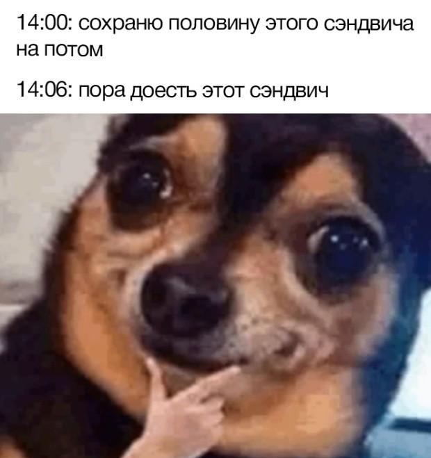 Подборка прикольных фото (66 фото) 17.06.2019
