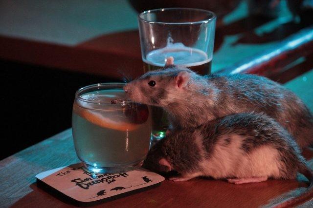 """В Сан-Франциско открылся """"крысиный"""" бар (2 фото)"""