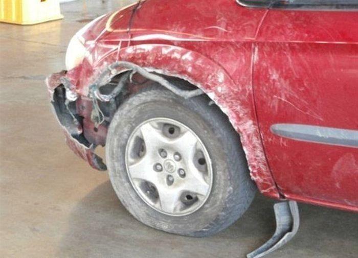 Что может сделать бультерьер с вашей машиной (3 фото)