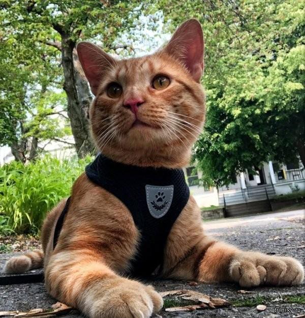 """Необычный котик, с """"дополнительными"""" лапками (5 фото)"""