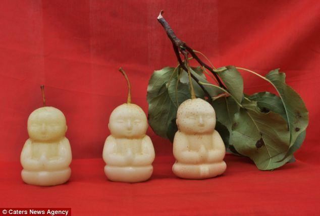 Груши в форме Будды (7 фото)
