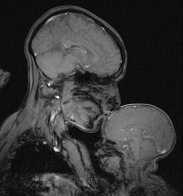 Мир глазами рентгенолога (17 фото)