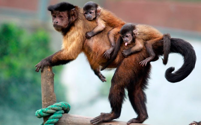 Лучшие фотографии животных за неделю (25 фото)