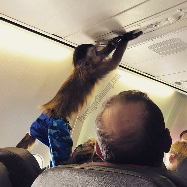 Не самые лучшие пассажиры самолета (20 фото)