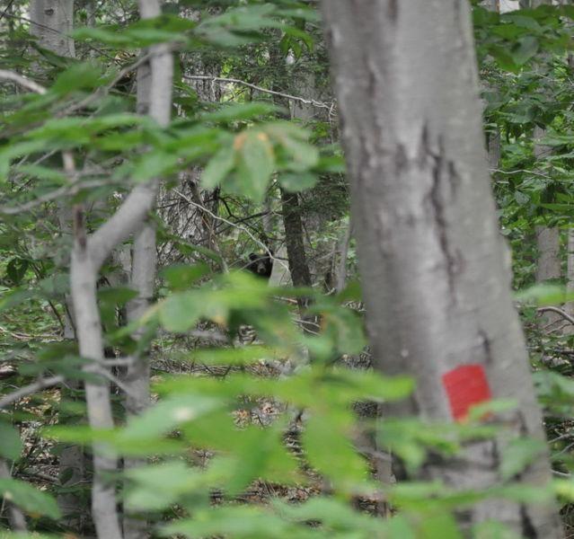 Однажды в лесу (2 фото)