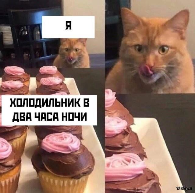 Подборка прикольных фото (60 фото) 21.06.2019