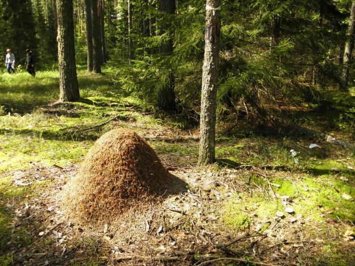 Как егери спасаются от комаров в лесу (7 фото)