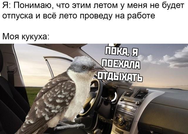 Подборка прикольных фото (60 фото) 26.06.2019