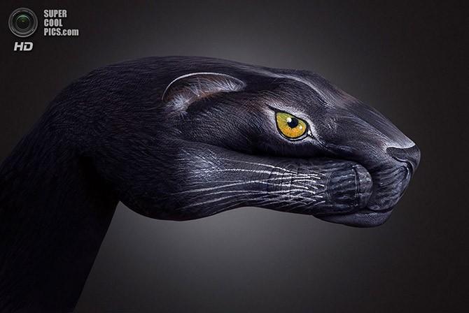 Ручные звери Гвидо Даниэле (17 фото)