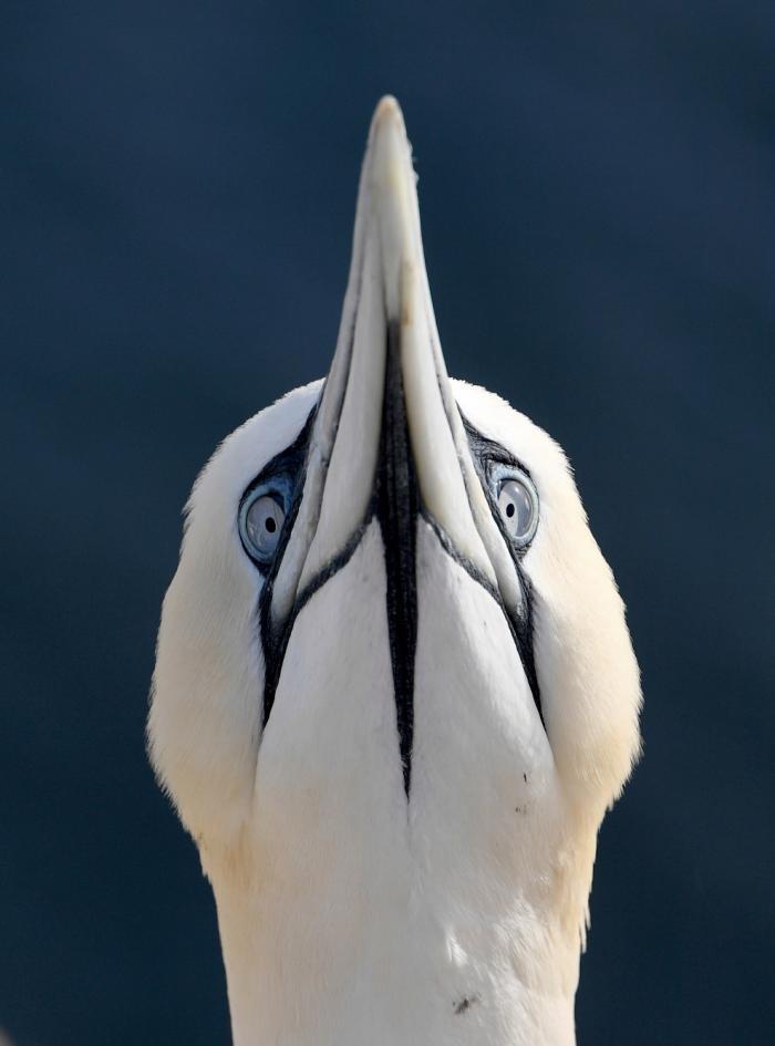 Животные в фотографиях (13 фото)