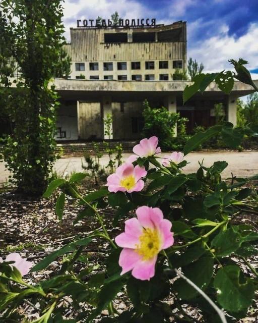 Как природа забирает Чернобыль (65 фото)