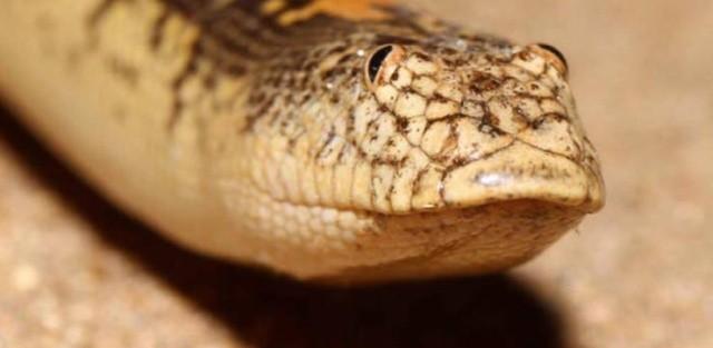 Самая забавная змея (7 фото)