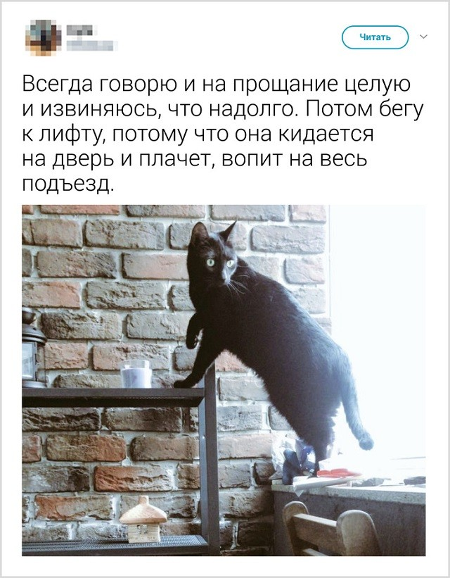 Как прощаются со своими котиками перед выходом из дома (13 скриншота)