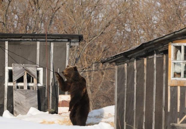 Зачем медведи встают на задние лапы (12 фото)