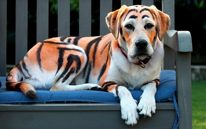 Лучшие фотографии животных за неделю (13 фото)